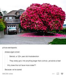 Behold, a year old rhododendron They rarely grow into anything larger than a shrub, yet alone a tree! Why does this not have more notes? Because we're scared - iFunny :) Tumblr Stuff, Tumblr Posts, Tumblr Funny, Funny Memes, Hilarious, Haha, Mind Blown, Funny Photos, The Funny