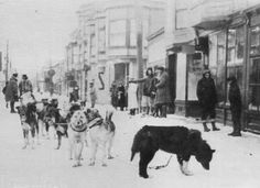 Balto and the team that delivered lifesaving serum to Nome,1925: He eventually reached Point Safety at 3 AM actually ahead of schedule only to find the next driver asleep and with his team unprepared. With his lead dog Balto and the rest of the team performing well, Kassen chose to keep on going for the final 25 miles to Nome, arriving on this date in 1925 at 5:30 AM with his cargo intact, without a single vial of the serum broken.