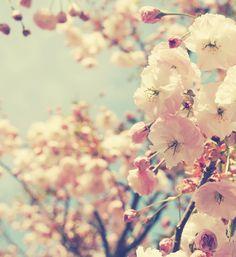 #spring Kristybee photograph