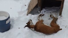 As recent cases of neglect,dueto dogs being left out in the cold have come to light in New York,it has been made clear that some changes needto be made to Article 26B( Agriculture and Market Law-relating to Cruelty to Animals ). I would like to follow Indiana's example and require that no dog be...