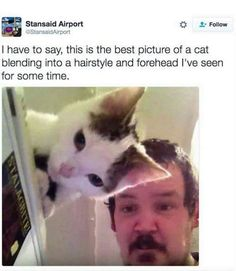 We have seen thousands funny cat selfie photos. But none of them are as good as those two perfectly timed photos!