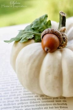 Fall - Autumn - Thanksgiving -Mini White Pumpkin with acorn Autumn Decorating, Pumpkin Decorating, Harvest Time, Fall Harvest, White Pumpkins, Fall Pumpkins, Fruits Decoration, Acorn Decorations, Happy Fall Y'all