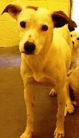 ***SUPER URGENT!!!*** - PLEASE SAVE ME!! EU DATE: 7/31/2014 -- lipsi  Breed: Jack Russell Terrier / Mixed (mix breed) Age: Adult Gender: Female  Size: ,  Shelter Information:   Elizabethton Carter County Animal Shelter  135 Sycamore Shoals Dr   Elizabethton, TN  Shelter dog ID: D2014359 Contacts:  Phone: 423-547-6359  Name:  April Jones  email: animalshelter@cartercountytn.gov