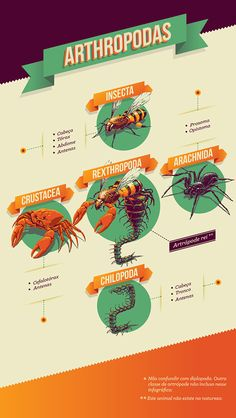 Neat! Love the colors. And perspective. <3 -- Arthropodas Infographic on Behance