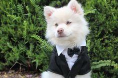 Desideri che il tuo cucciolo sia con te in ogni momento della tua vita? Scrivi nel forum del nostro sito www.petattention.wixsite.com/petattention e troverai quel che cerchi!