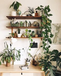 Beautiful House Plants For Decoration.To decorate your home, you must think of Simple and Beautiful House Plants Decor Ideas. House Plants Decor, Plant Decor, Plants In The House, Living Room Plants Decor, Morning Inspiration, Room Inspiration, Interior Plants, Interior Design, Studio Interior