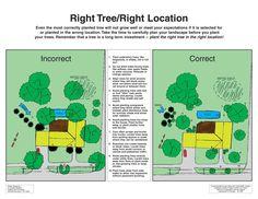 Right Tree Right Location. Fruit Trees, Trees To Plant, Landscape Design, Garden Design, Tree Plan, Tree Care, Home Landscaping, Garden Trees, Growing Tree