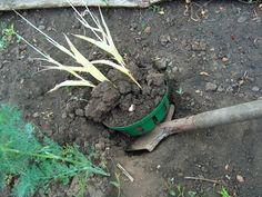 Картинки по запросу корзина для посадки луковичных