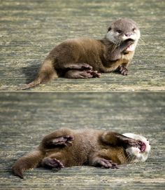 Now tell me that's not cute. <333 baby otters