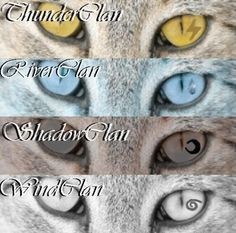 ThunderClan, RiverClan, ShadowClan, WindClan. Don't forget StarClan and SkyClan!