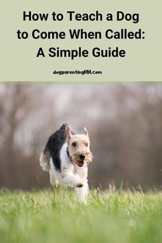 Teaching a dog to come when you call him is one of the most important things you can do. One day it could save his life. #dogsafety #trainyourdog #wellbehaveddog Dog Health Tips, Dog Health Care, All Dogs, Best Dogs, Animal Antics, Dog Safety, Guide Dog, Parenting 101, Dog Behavior