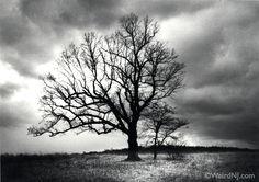 The Devil's Tree | Weird NJ
