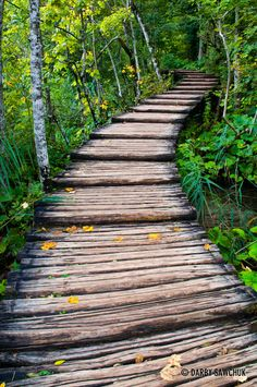 A wooden walkway below a forest in the Plitvice Lakes National Park, Croatia