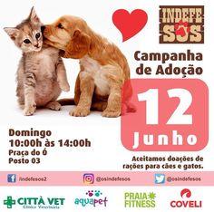 BONDE DA BARDOT: RJ: Adoção de cães e gatos na Barra da Tijuca, neste domingo (12/06)