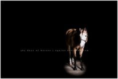365 Days of Horses Pictures Black Background
