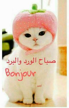 Good Morning Arabic, Good Morning Images, Purple Roses Wallpaper, Messages Bonjour, Into The Woods Quotes, Evening Quotes, Family Drawing, Good Morning Greetings, Morning Wish