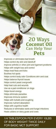 Coconut Oil Uses - Coconut Oil Uses - Benefits of Coconut Oil for Pets oil # pets 9 Reasons to Use Coconut Oil Daily Coconut Oil Will Set You Free — and Improve Your Health!Coconut Oil Fuels Your Metabolism! 9 Reasons to Use Coconut Oil Dail Coconut Oil For Dogs, Coconut Oil Uses, Dog Health Tips, Pet Health, Pet Dogs, Dogs And Puppies, Doggies, Game Mode, Gato Gif