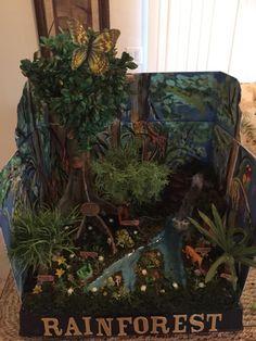 Sophias diorama rain forest