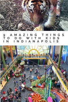 9 Amazing Things to do with Kids in Indianapolis