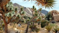 Joshua Tree Nat'l Park: Amazing, mystical, fascinating!  I personally recommend Split Rock Trail (~2 miles. Moderate, but do tie on a good pair of hikers.  Enjoy!