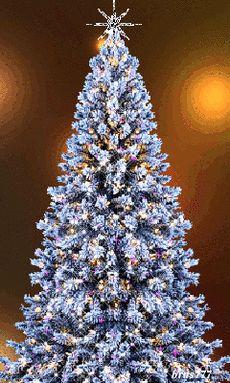 Oh Christmas Tree Christmas Tree Gif, Merry Christmas Pictures, Christmas Scenery, Beautiful Christmas Trees, Blue Christmas, Christmas Greetings, Winter Christmas, Christmas Tree Decorations, Christmas Lights