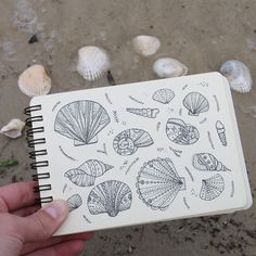 Day 30 of Shell. Doodles Zentangles, Zentangle Patterns, Shell Drawing, Watercolor Journal, Art Folder, Simple Doodles, Writing Art, Sketch Notes, Art Journal Inspiration