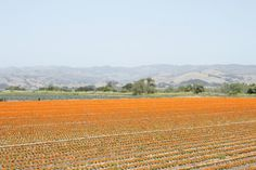 Prettiest place on earth? Why yes. The Santa Ynez Valley.