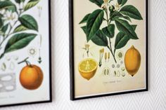 Has link to flicker account with AWESOME botanical prints for free!