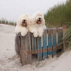 couple-chien-plage