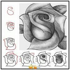 Zo teken je een mooie roos in stappen! probeer maar uit.