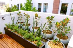 8 Fruit Trees for Your Balcony
