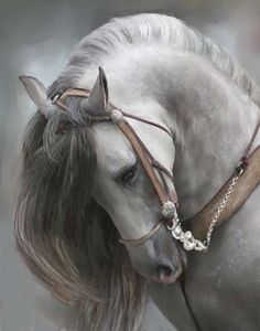 ~` beautiful Andalusian horse `~ Reminds me of Silvering from the novel, Dagon's Blood