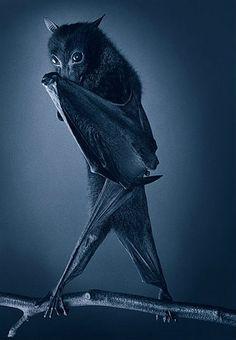 As semelhanças entre expressões humanas e a dos animais retratados são abordadas em muitos estudos. A representação desse morcego traz referências aos personagens de 'Batman' ou 'Drácula'