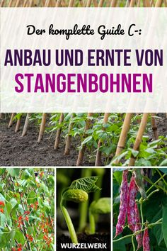 Solar Light Crafts, Runner Beans, Love Garden, Different Plants, Kinds Of Salad, Garden Planning, Horticulture, Belle Photo, Most Beautiful Pictures