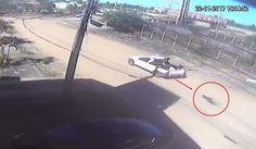 """""""O Grito do Bicho"""": Polícia identifica dono de carro que arrastou cach..."""