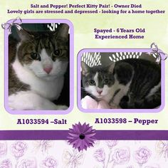 TO BE DESTROYED 4/24/15 *NYC* Staten Island Center *A staff member writes: Salt and Pepper were brought to us because their owner died. They are not adjusting well in the shelter. They are not aggressive but we can see they are a bit stressed and depressed. * My name is SALT. ID # A1033594. I am a spayed female brn tabby and white dom sh mix. I am about 6. *** My name is PEPPER. ID # A1033598. I am a spayed female gray and white dom sh mix. I am about 6.