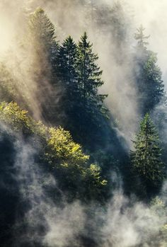 cre8ti0n:  Smoky forest   bySteffen Egly  Website.