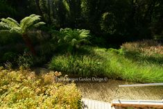 Wednesday we had glorious blue sky sunshine. Its been torrential rain since, I wonder was that the last gasp of summer? Forecast for the coming weeks suggests we may need boats to get around. A pic of one of my recent projects lifted by the sun. This is in Cheshire in the North west UK. #Gardendesign #gardendesigner Landscape Design, Garden Design, North West, Design Projects, Wednesday, Boats, Sunshine, Rain, Sky
