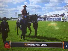 Roaring Lion, Horses, Animals, Animales, Animaux, Animal, Animais, Horse