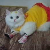 cat, pet, clothes, shoes, cute, funny, photos