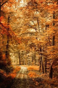 Autumn Secret Photograph of an Autumn landscape with a path through woods with orange leaves and a shallow depth of field. Autumn Secret Wall Art From: Pacific Art Group, By: Philippe Sainte-Laudy from Great Big Canvas