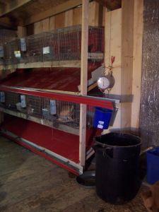 Rabbit Shed, Rabbit Farm, Rabbit Run, Small Rabbit, House Rabbit, Bunny Cages, Rabbit Cages, Raising Rabbits For Meat, Rabbit Habitat