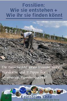 Fossilien suchen: Wir haben Spuren längst vergangener Erdzeitalter gesucht und zahlreiche Fossilien gefunden. Aber wie konnten diese Überreste längst ausgestorbener Wesen so lange überdauern? Dieser Beitrag erzählt von der geheimnisvollen Wandlung, die ein Lebewesen durchläuft, bis wir es Millionen Jahre später als Fossil bewundern können. Wenn du danach Lust verspürst, selbst fossile Schätze zu suchen:Das ist nicht schwer! Unsere nützlichen Tipps helfen beim Finden und Bergen von Fossilien! Bergen, Kids And Parenting, Habitats, Tours, Outdoor, Travel, Extinct Animals, Natural Wonders, Road Trip Destinations