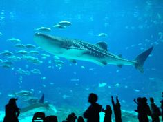 AWAKENING FOR ALL: LISBON Oceanarium.