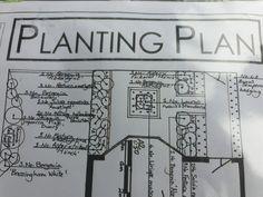 Buxus, House Front, Garden Plants, Floor Plans, Floor Plan Drawing, House Floor Plans