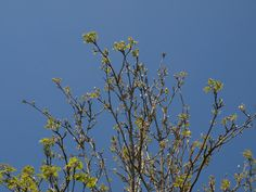 Spring..  Blue skies & the Trees bursting into life