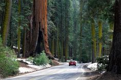 Sequoia National Park - I will be there in May (with my RV and my man)!!!!!!!!!