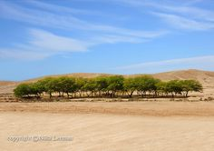 A beautiful oasis in a desert and blue sky with by NikaLerman, $25.00