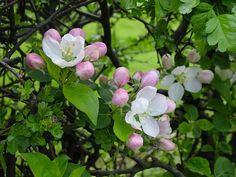 Hedgerow Blossom by David Hulme, via Flickr