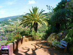 Magical Madeira Island - Botanical Gardens #Portugal